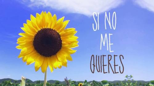 Danny Fornaris Ft. Jani Sanchez - Si No Me Quieres (Video Lyric Oficial + MP3) | Jani Sanchez